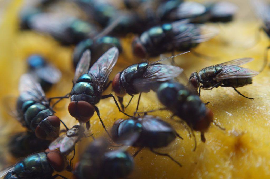 elhalt méhek pikkelysömörének kezelése