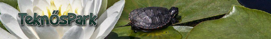 vörös foltok a teknős hasán pikkelysömör és artlife gyógyszerek