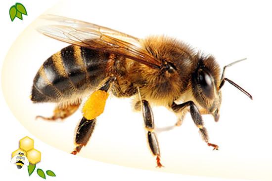 méhek krém viasz pikkelysömör)
