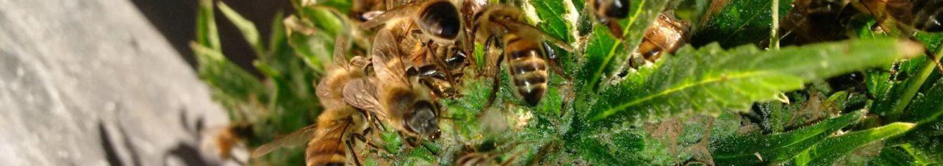 Parazitizmus bika szalagféreg - Kukacok a gyerekkakiban? Csak semmi pánik, így kezeld!