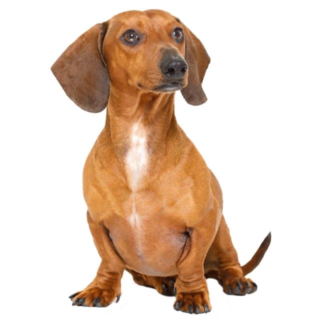 Szőrhullás kutyáknál: a 10 leggyakoribb ok