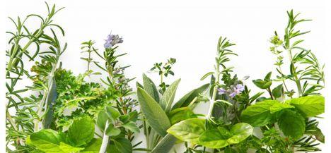 60+ Praktikák ideas in | természetes egészség, egészség, gyógynövények