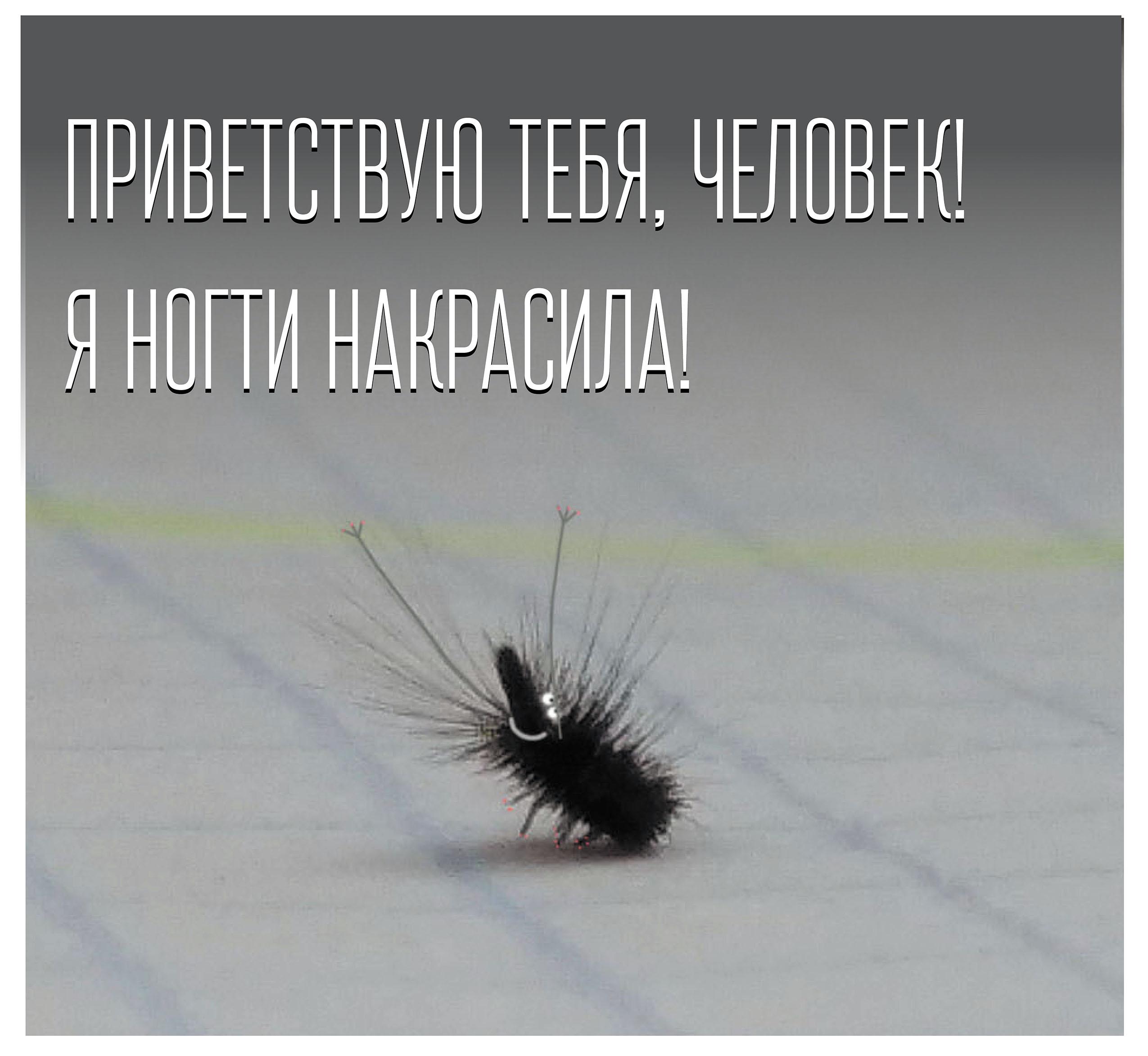 hol kezelik a pikkelysmr a Kaukzusban)