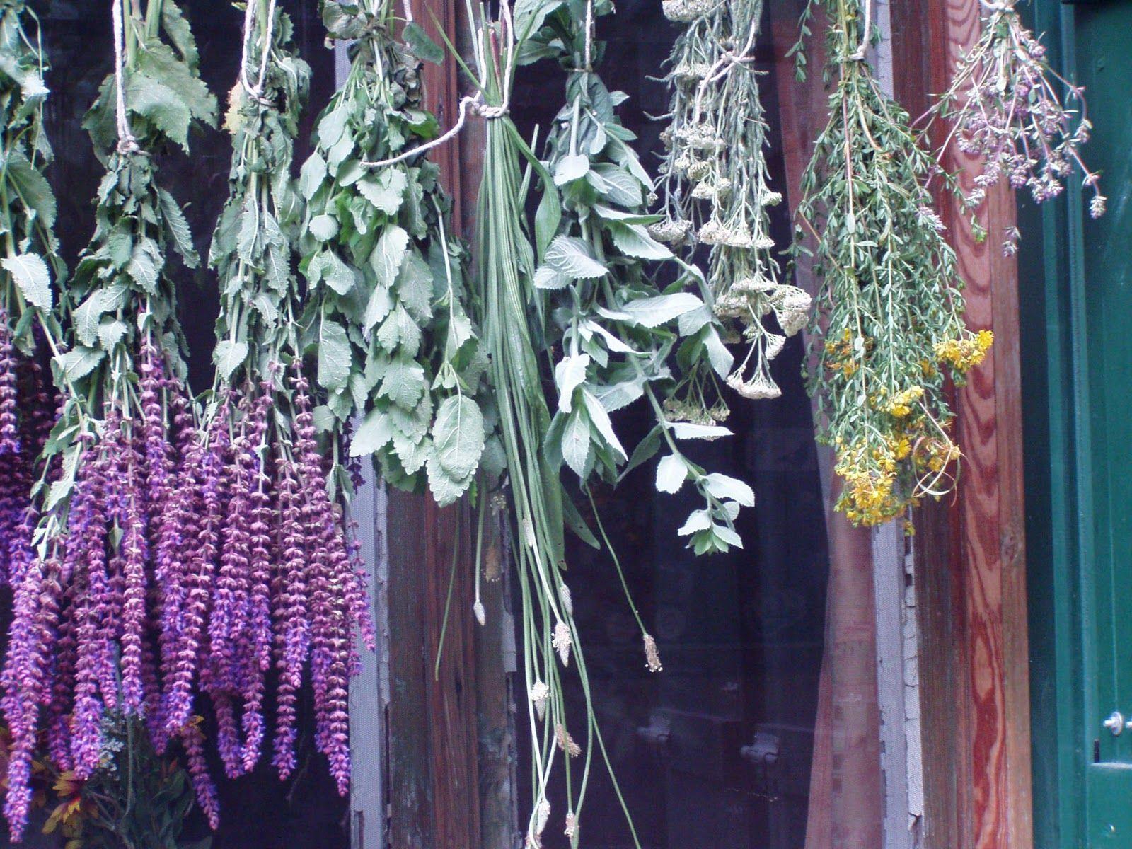 gyógynövények gyűjtése a kaukázusból pikkelysömörhöz)
