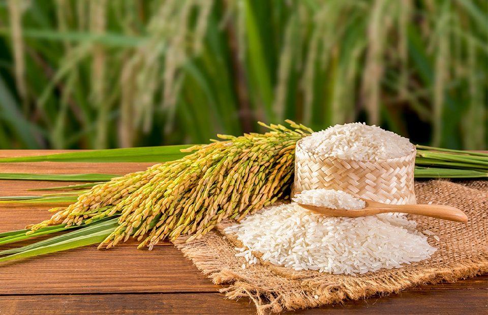 rizs pikkelysömör kezelése)