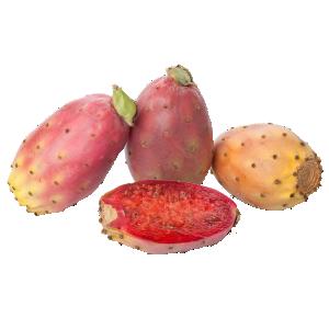 kaktusz pikkelysömör orvosság)