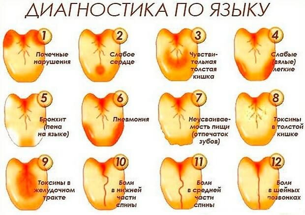 vörös foltok a hátsó fej hasán)
