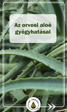 gyógyítja-e a körömvirág a pikkelysömör gyógynövények és pikkelysömör kezelése